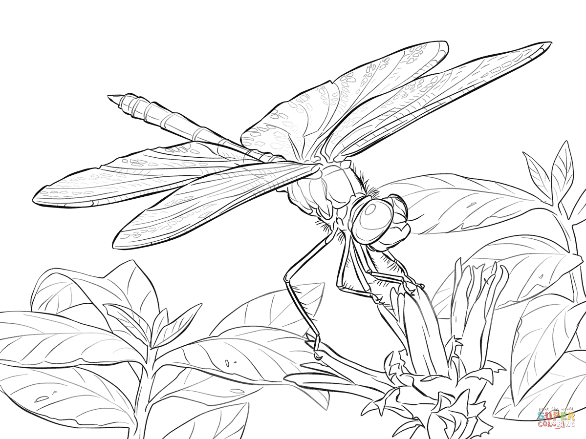 1199x899 Yellow Winged Darter Dragonfly Coloring Page Free Printable