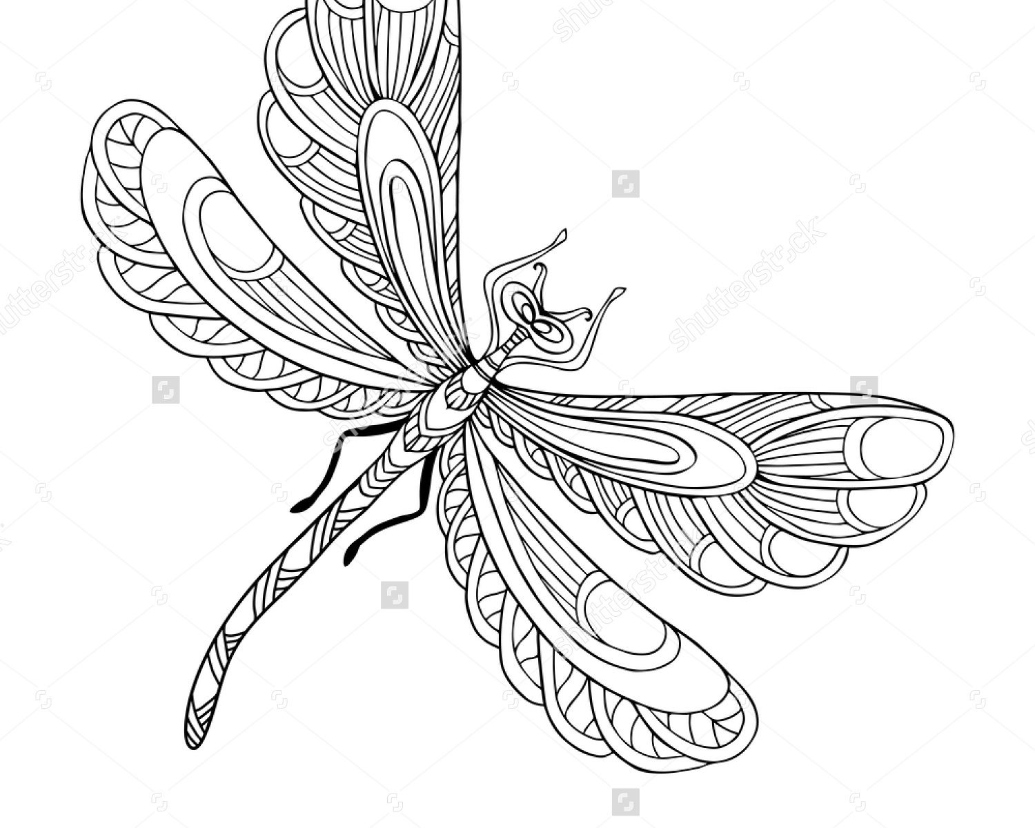 1500x1200 Dragonfly Coloring Pages For Kids Free To Print Fantastic Animals