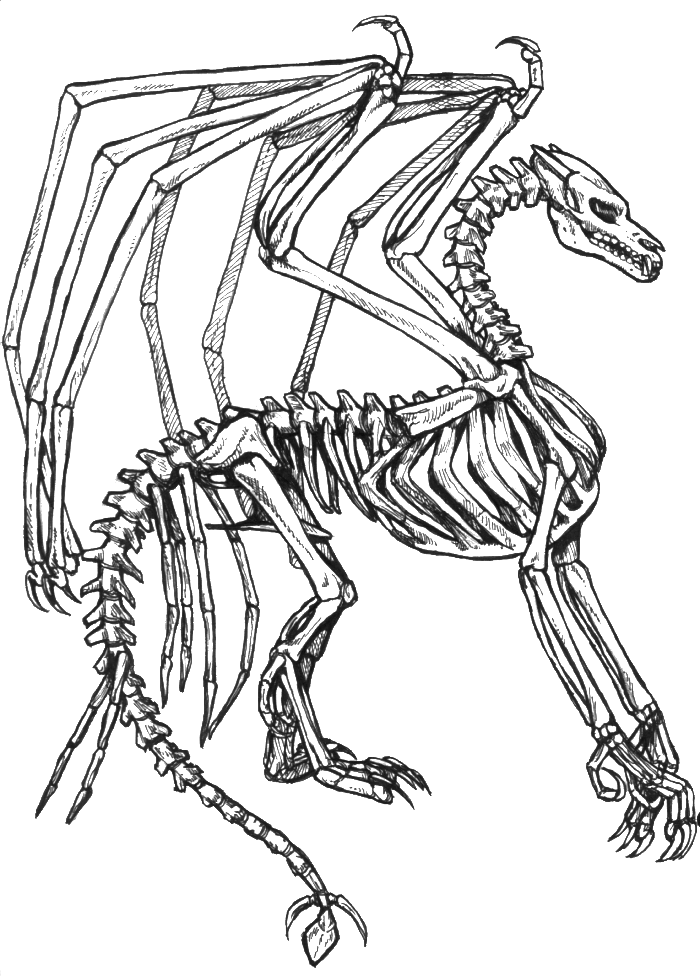 700x976 Dragon Skull Coloring Pages Head