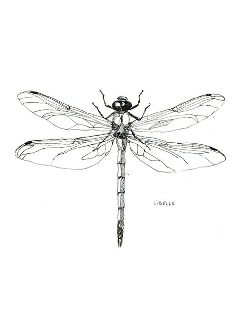 Dragonflies Drawing
