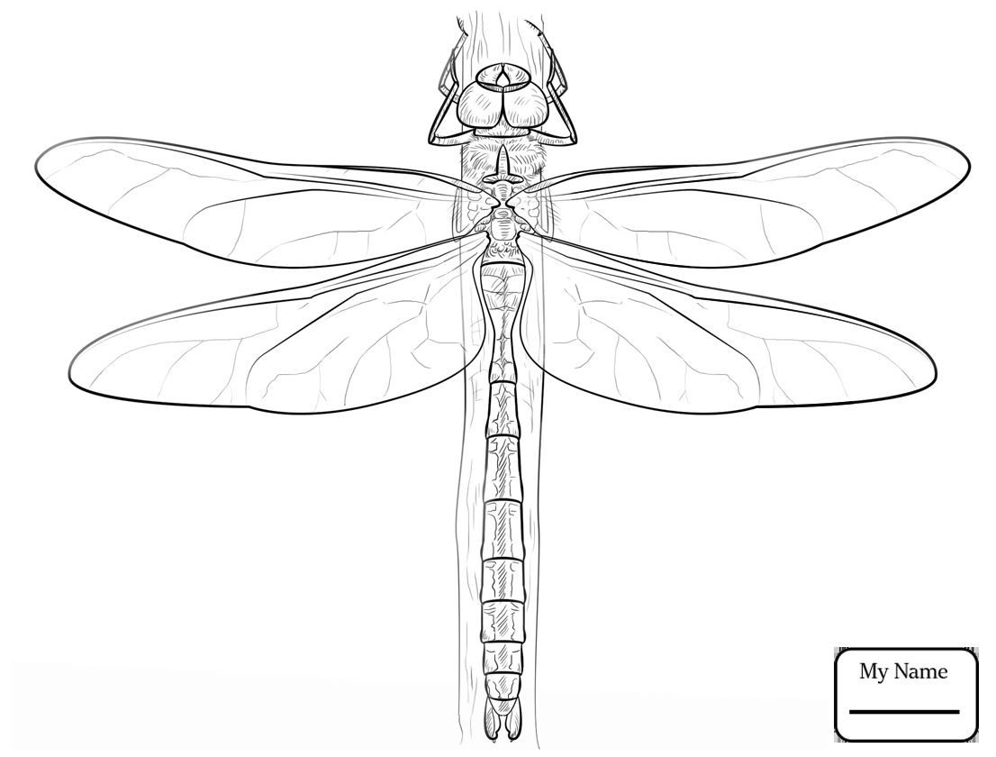Dragonflies Drawing at GetDrawings.com | Free for personal use ...