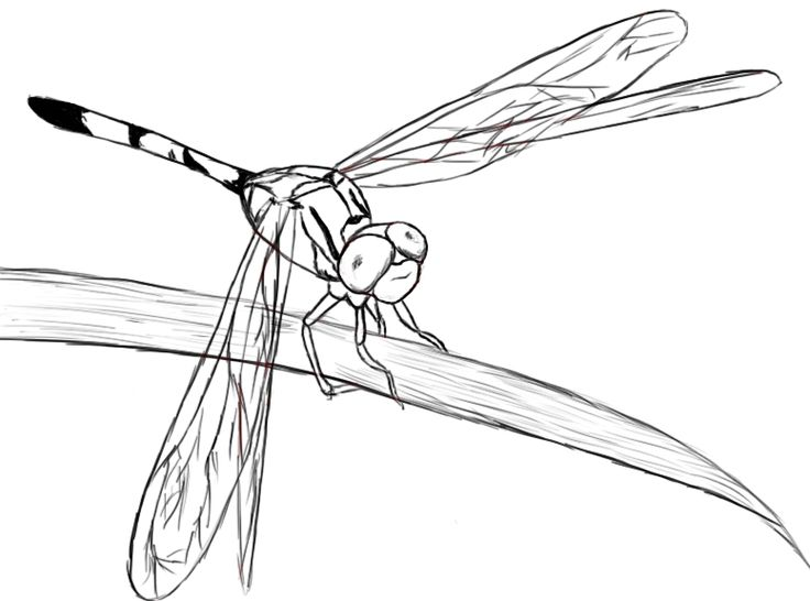 Dragonfly Drawing Images