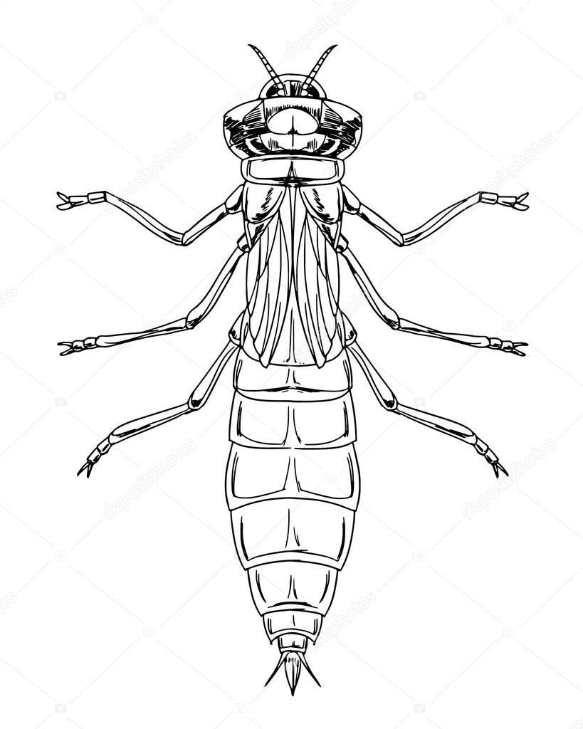 819x1024 Dragonfly Nymph Stock Vector Blueringmedia