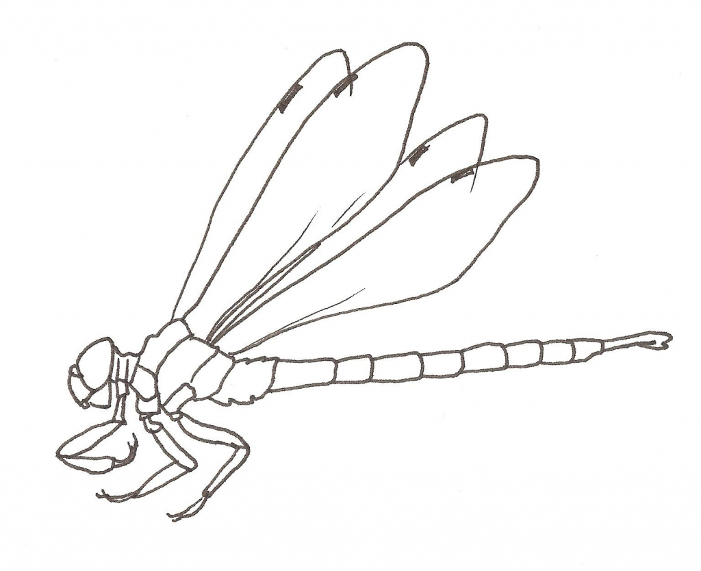 1024x834 Drawing Of A Dragonfly Draw To Learn Dragonfly Information