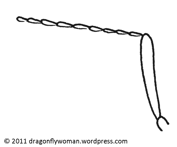 600x496 Drawings And Diagrams The Dragonfly Woman