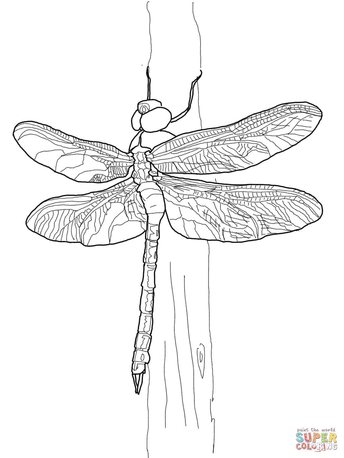 1200x1600 Green Darner Dragonfly Super Coloring