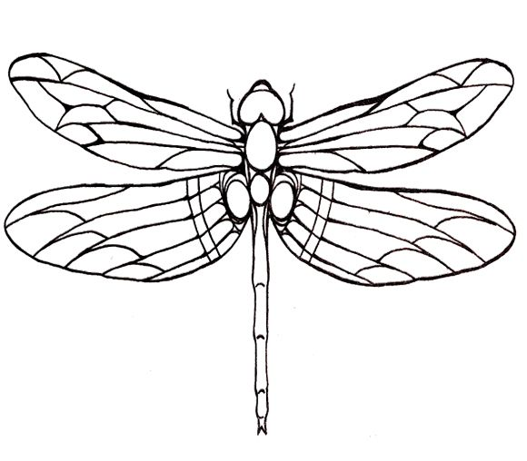 580x508 Draw Dragonfly Last Step 7 Drawings Coloring Page
