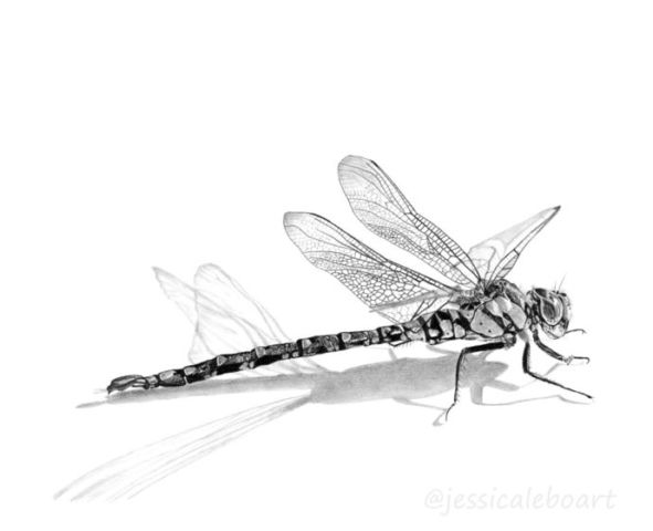591x480 53 Best Dragonfly Images On Dragonfly Painting