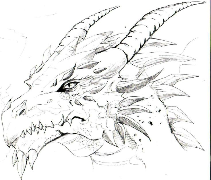 Dragons Drawing