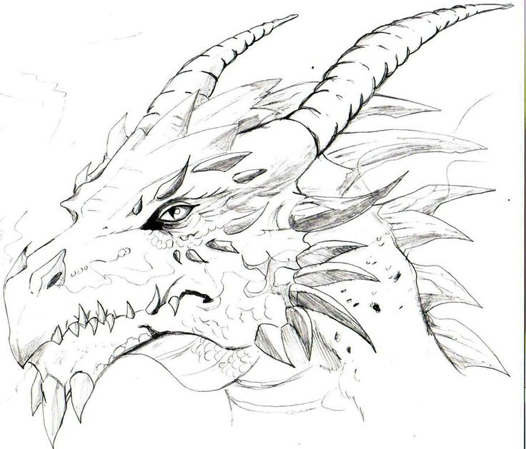 736x629 18 best dragons images on pinterest dragon sketch dragons and