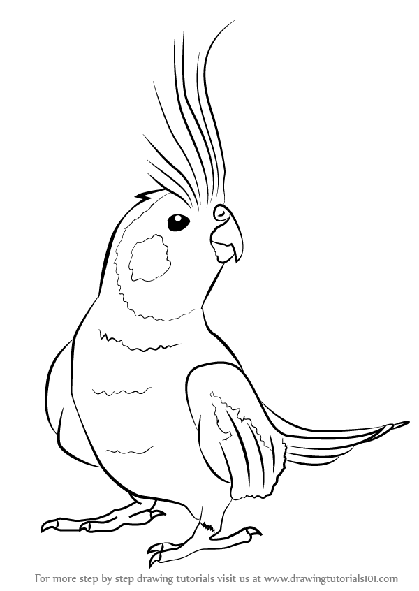 600x846 Learn How To Draw A Cockatiel (Birds) Step By Step Drawing Tutorials
