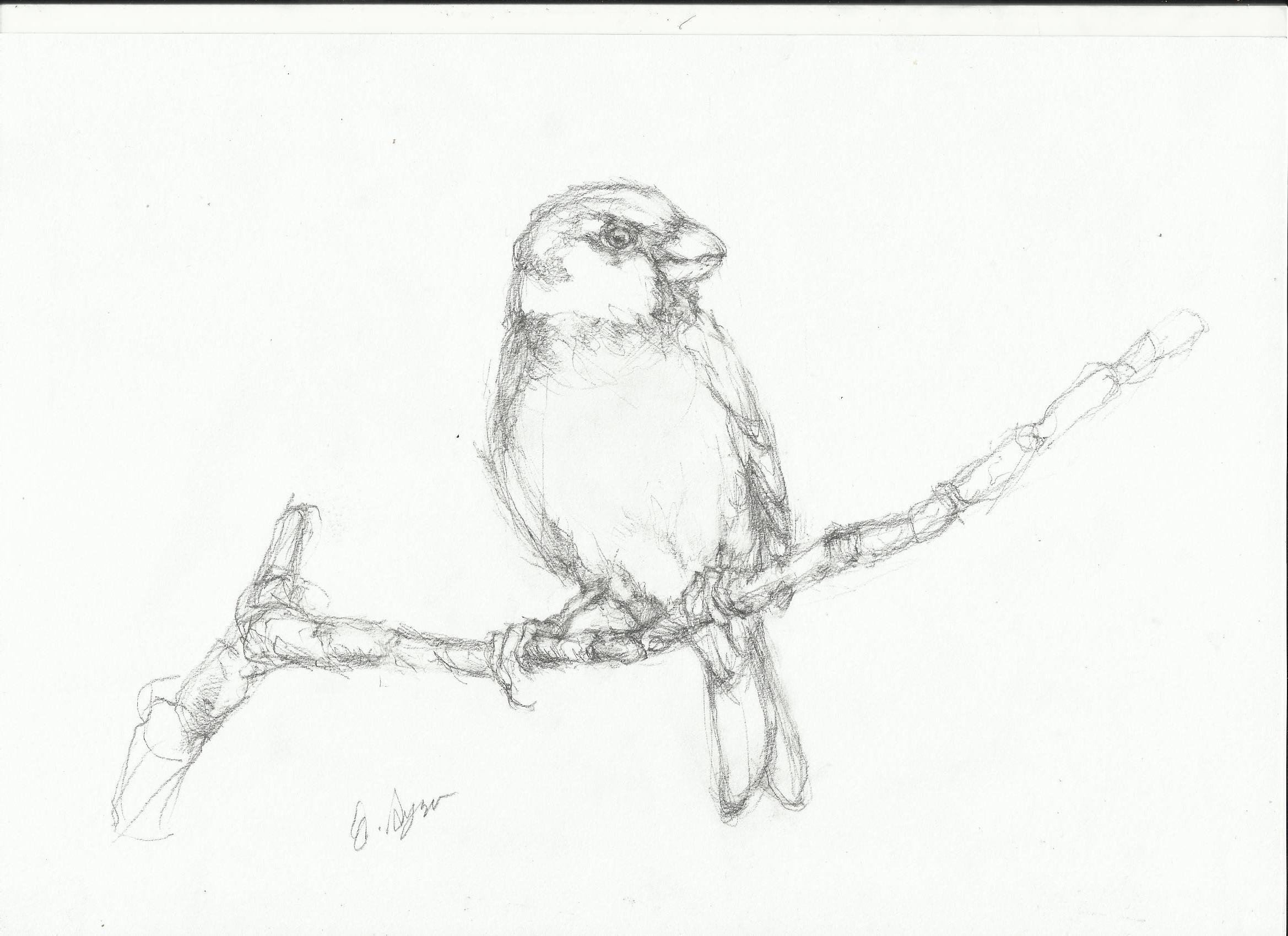 2338x1700 Sparrow Drawing Nightwithdeer
