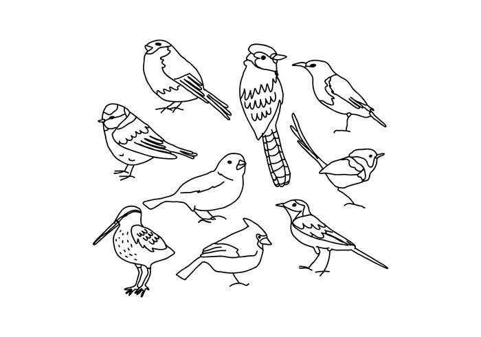700x490 Birds Drawings