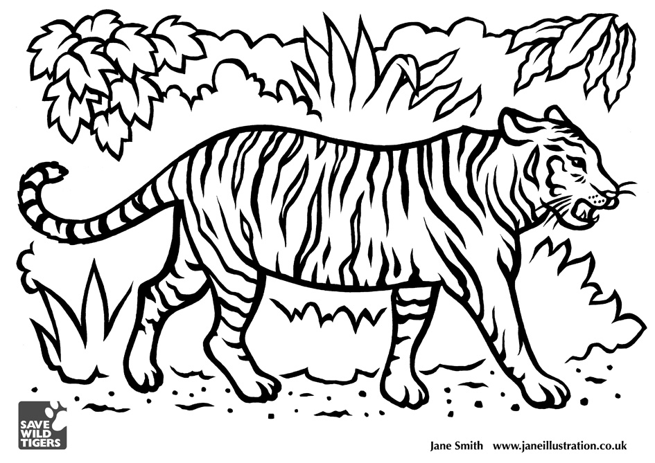 945x669 Tiger Drawing For Kids