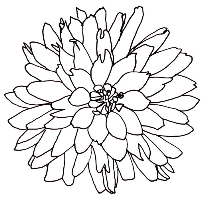 736x725 Line Drawing Of A Flower Free Download Clip Art Free Clip Art