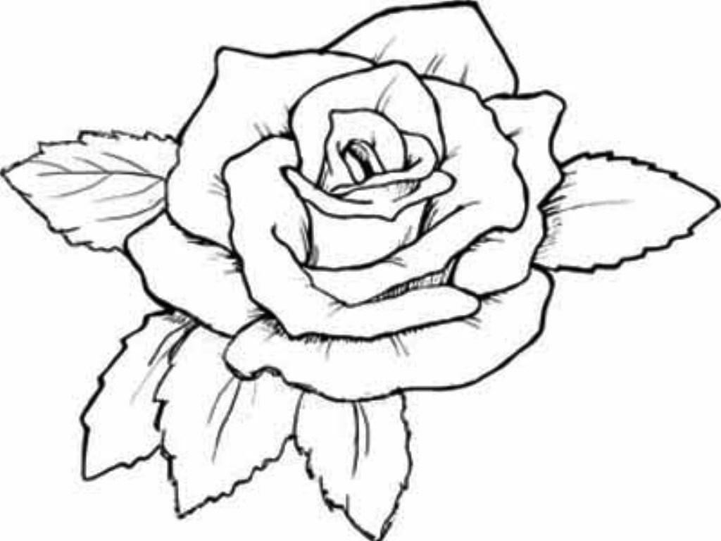 1024x768 Top 10 Beautiful Rose Coloring Pages Drawing