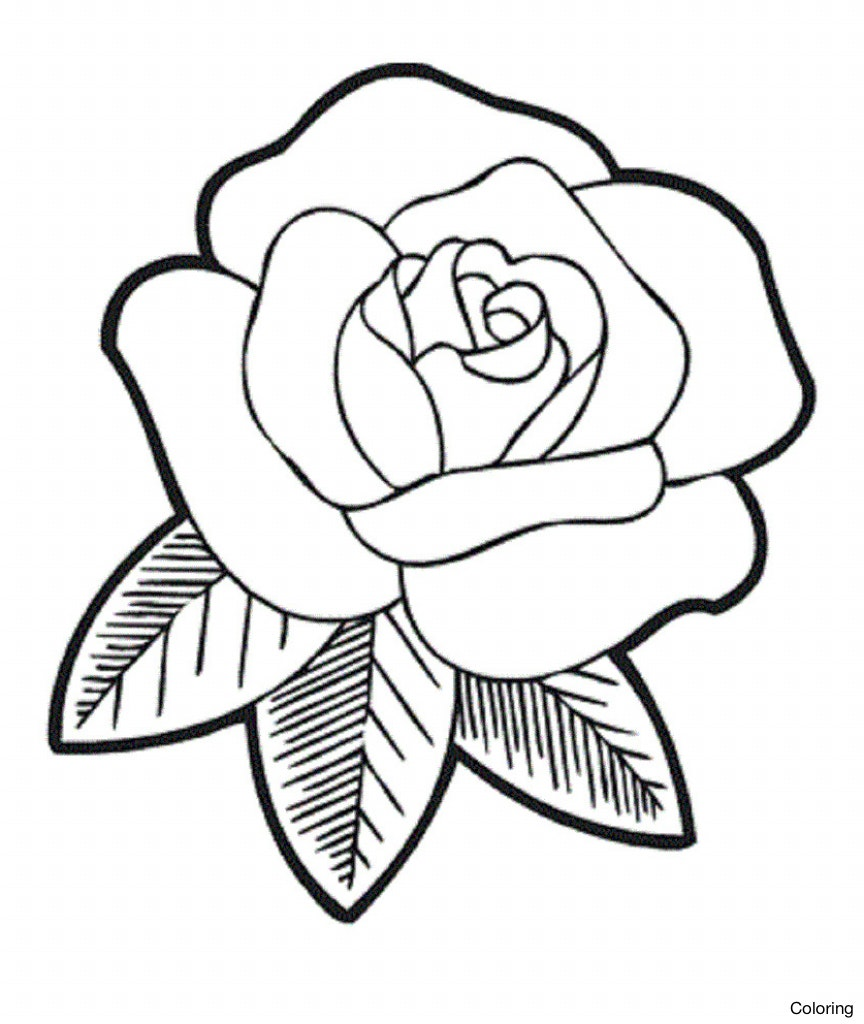 864x1024 How To Draw A Rose For Kids Coloring Step By 8f Videos Of Pic Diaiz