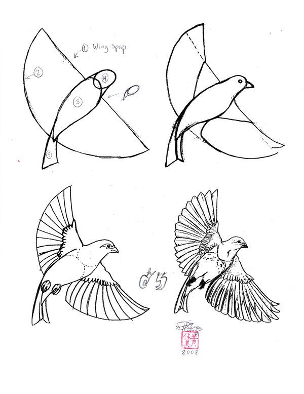 600x778 Check Out Other How To's For Birds And Other Drawing Art Lessons