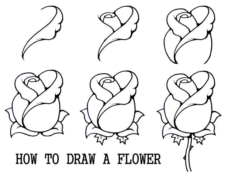 736x566 Steps To Drawing A Rose For Beginners