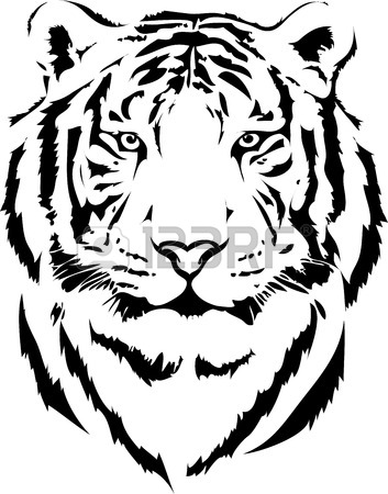 353x450 Tiger Drawing Stock Photos. Royalty Free Business Images