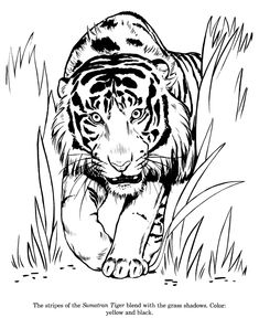 235x288 Color Book Printing Animal Coloring Pages Kids Coloring Pages