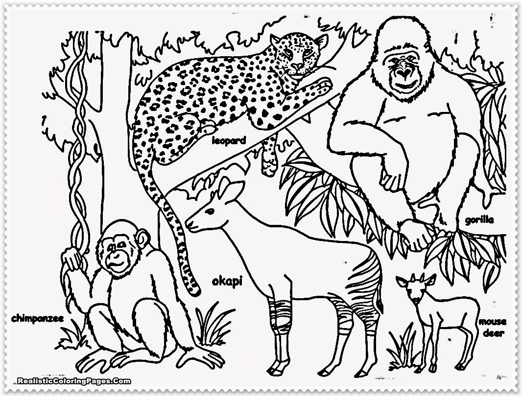 1066x810 Jungle Animal Coloring Pages Printable