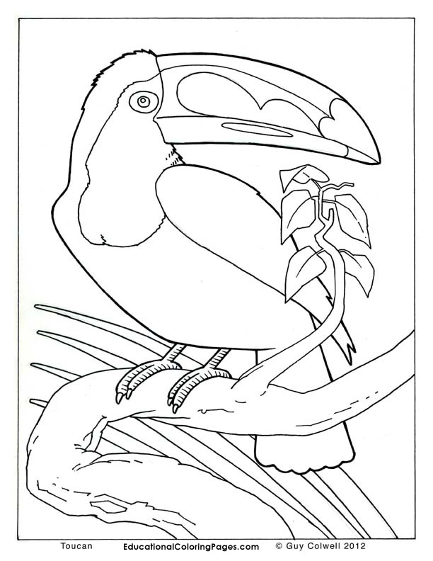 612x792 Realistic Animal Coloring Pages