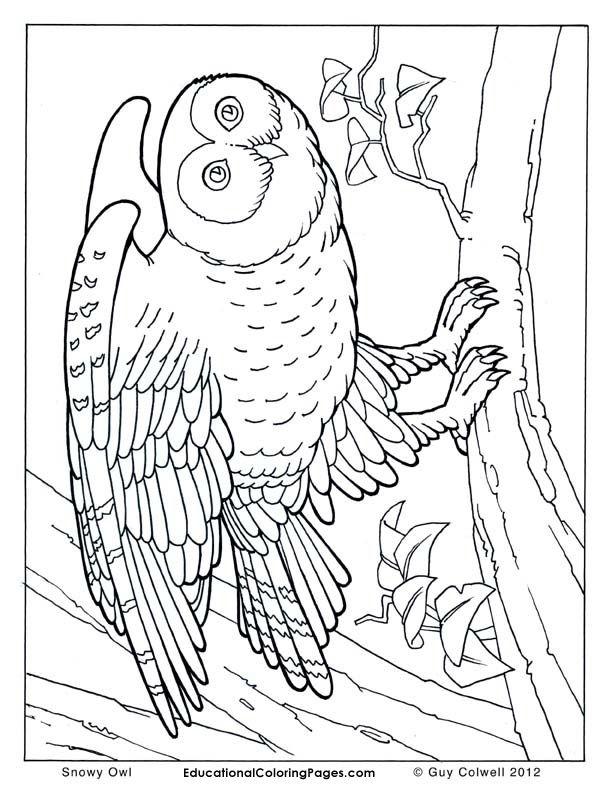 612x792 Realistic Animal Coloring Pages Collection
