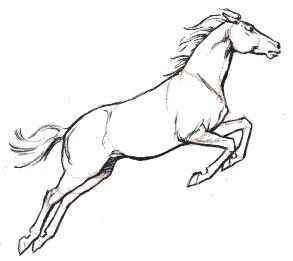 Drawing Picture Of Horse