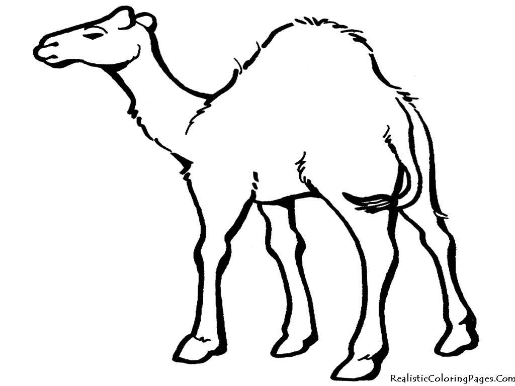 1024x768 Drawing Of Animal Camel In Desert