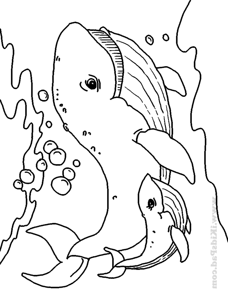 768x1024 Sea Animals Drawings