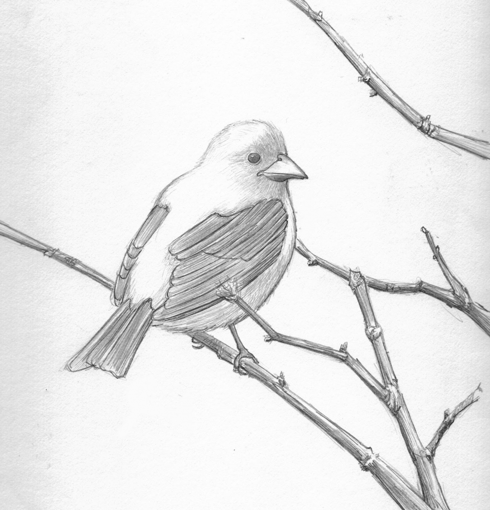 984x1024 Birds Pencil Drawing Birds Pencil Drawing Pencil Sketch Drawing