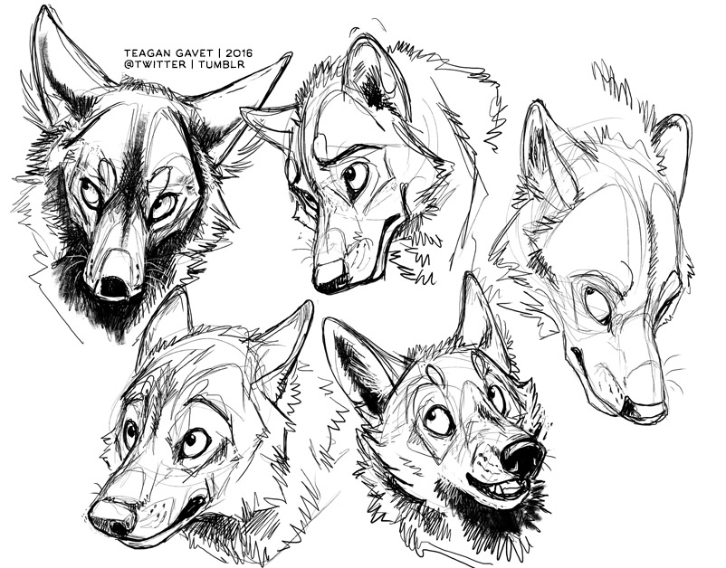Drawing Pictures Of Dogs