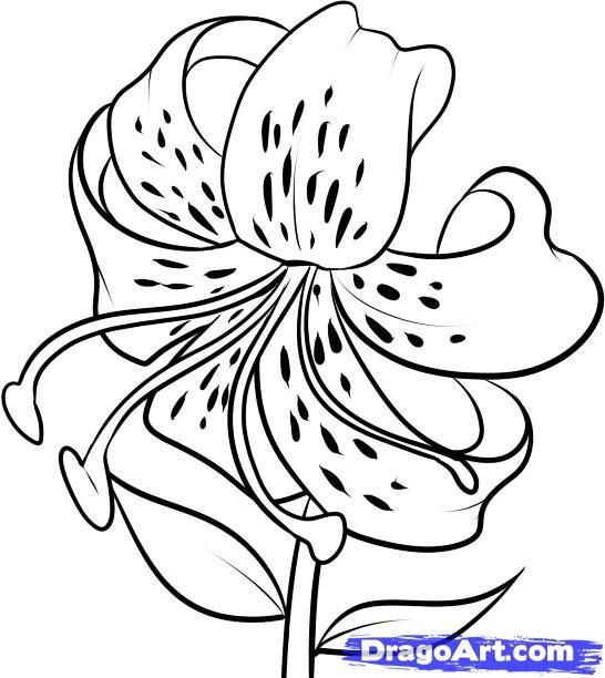 546x612 The 25+ best Easy to draw flowers ideas on Pinterest How to draw