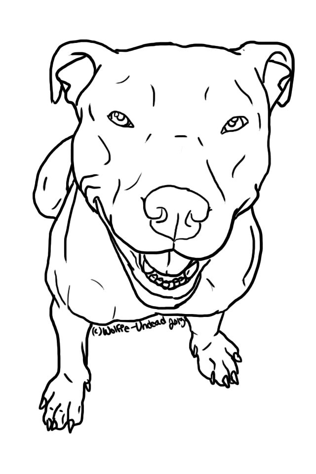 Cool Pitbull Anime Adorable Dog - drawing-pictures-of-pitbulls-12  You Should Have_469497  .jpg