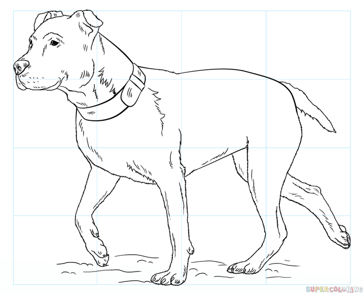 712x575 How To Draw A Pitbull Step By Step Drawing Tutorials