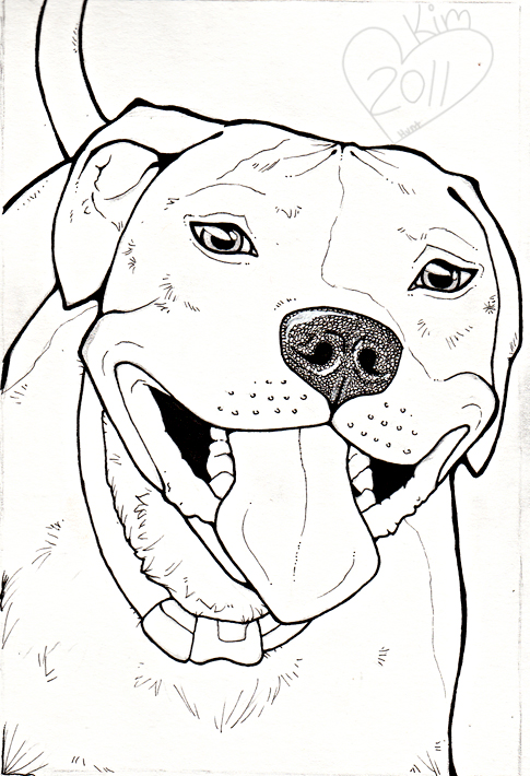 485x710 Image Result For How To Draw A Pitbull Face Animal Drawings