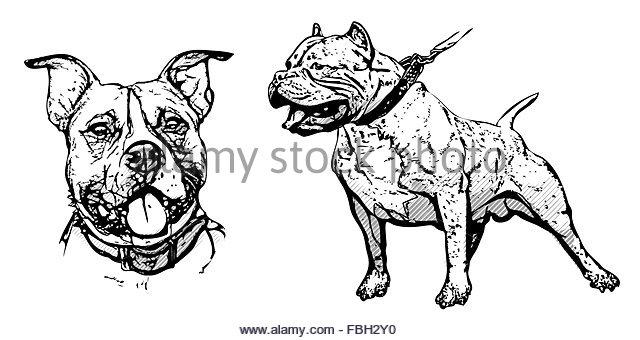 640x340 American Pitbull Terrier Stock Photos Amp American Pitbull Terrier