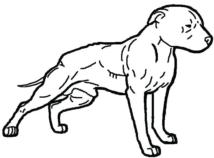 698x516 Pitbull Coloring Pages As Dog Coloring Pages Realistic Pitbull