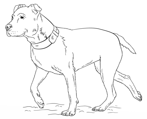480x387 American Pitbull Terrier Coloring Page Free Printable Coloring Pages