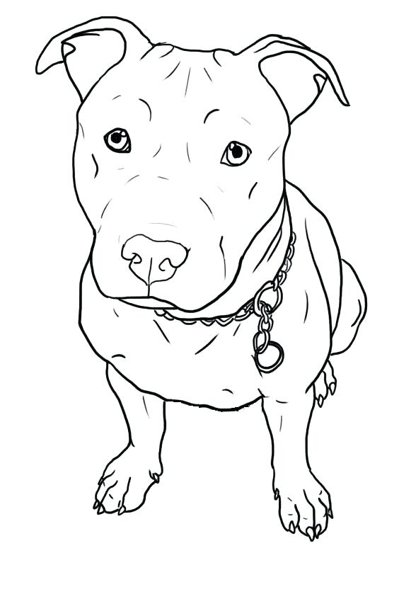 564x846 Pitbull Coloring Pages Free Printable Pit Bull Terrier Coloring