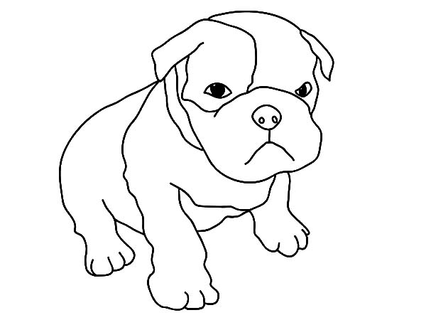 600x450 Baby Puppy Coloring Pages