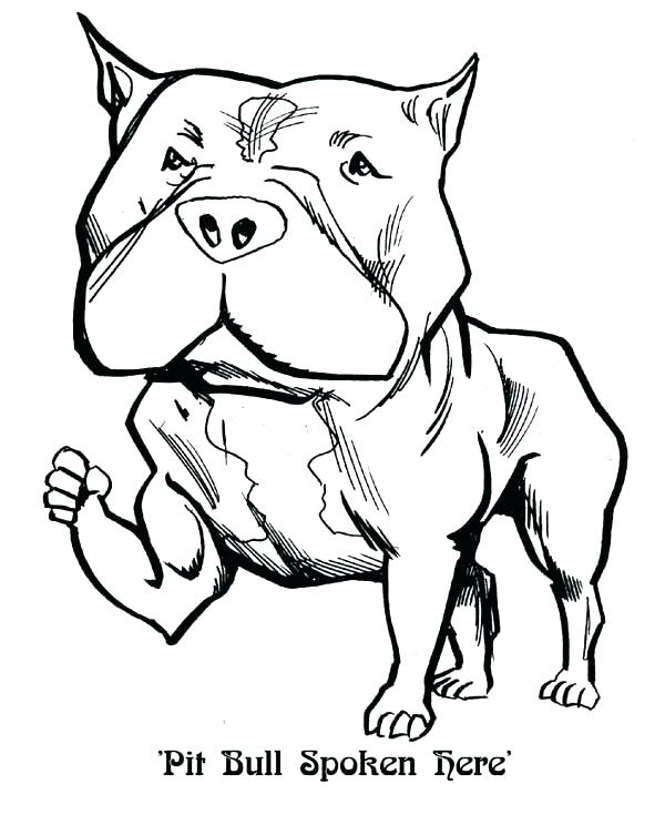 600x735 Coloring Pages Of Pit Bulls Coloring Pages Pin Drawn Pit Bull
