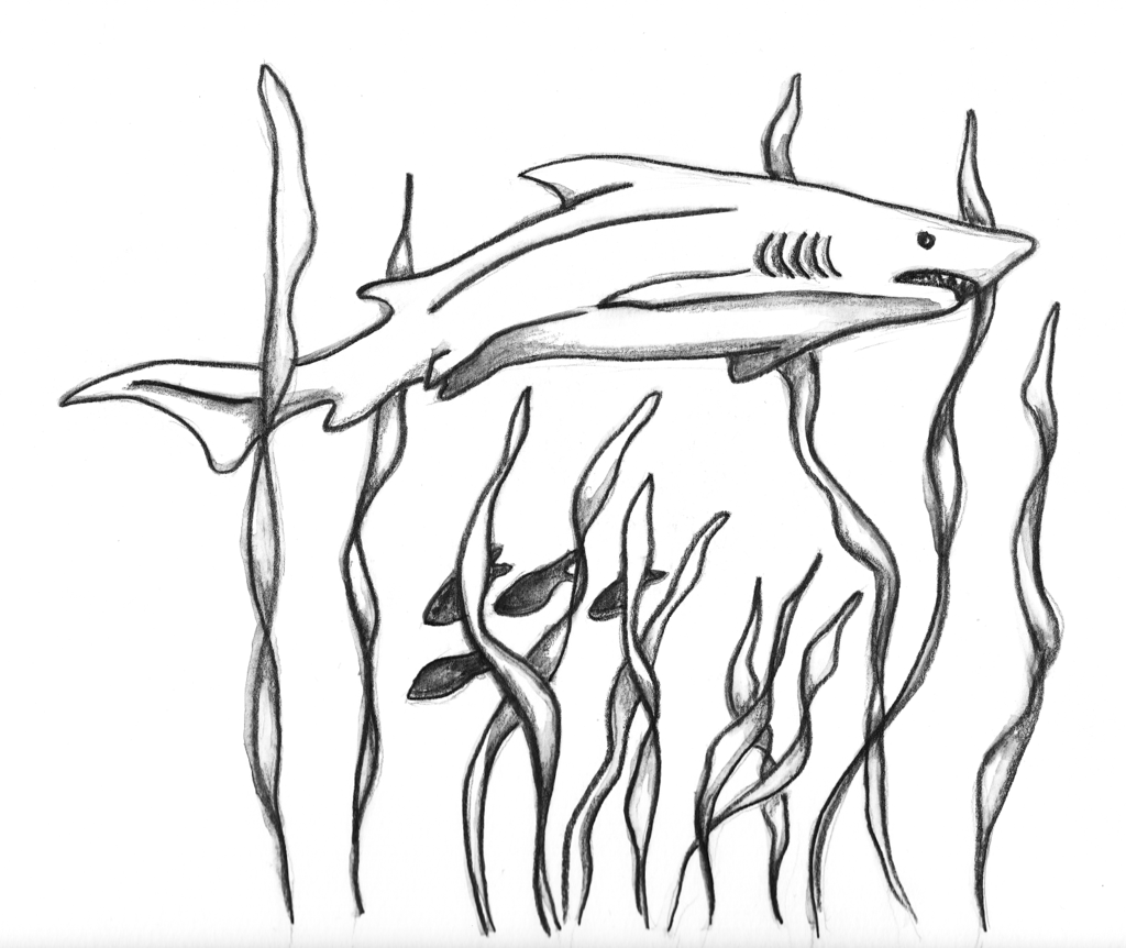 Drawing Pictures Of Sharks