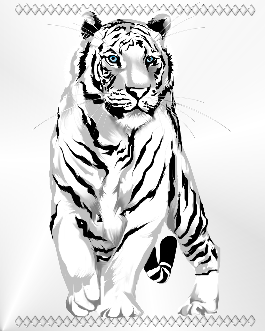 900x1125 Stately White Tiger By Lotacats05