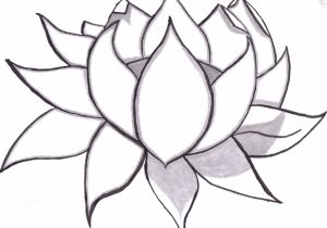 300x210 Lotus Flower Pencil Drawing Drawing A Lotus Flower With Simple