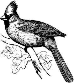 236x266 Northern Cardinal Bird Color Pencil And Marker Drawing