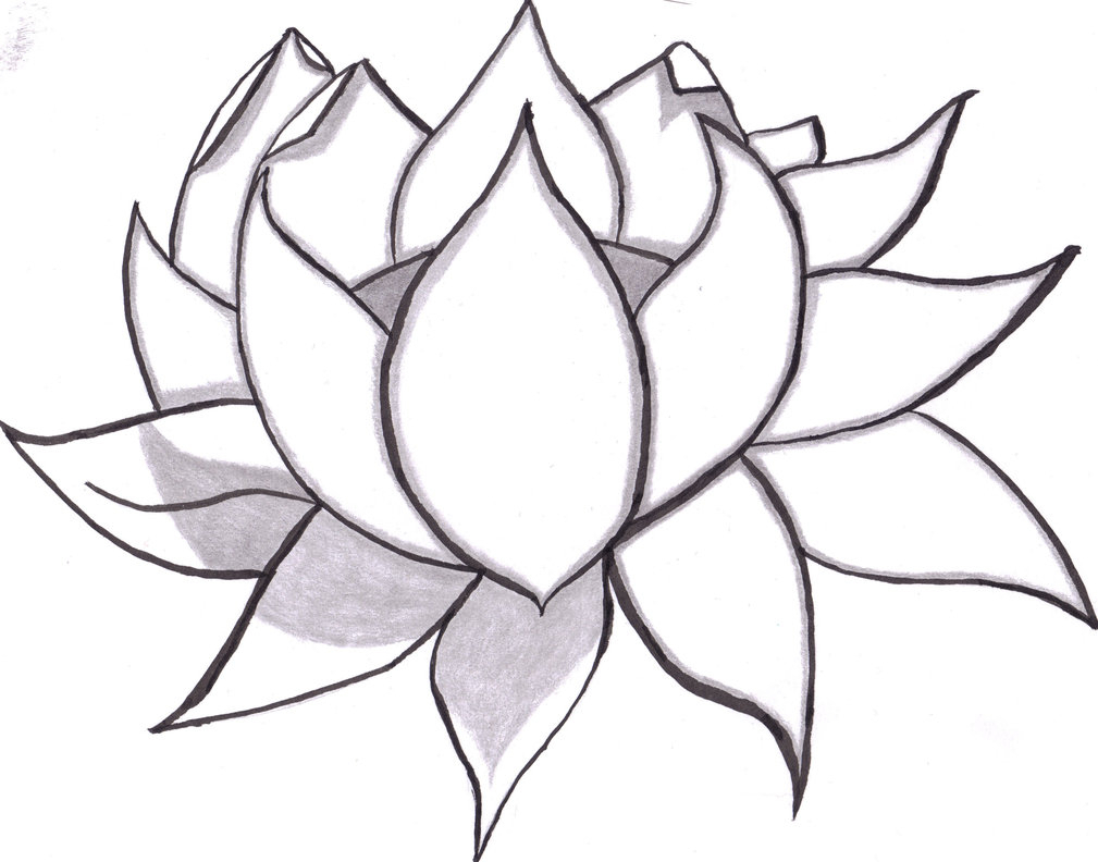 1009x792 Pencil Sketch Of Lotus Drawing A Lotus Flower With Simple Colored