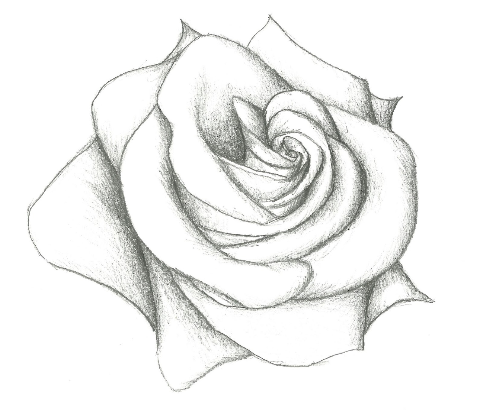 1600x1370 Rose Drawings In Pencil Drawing A Rose Flower With Simple Colored
