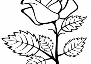 300x210 Rose Flower Drawing Pictures Drawing A Rose Flower With Simple